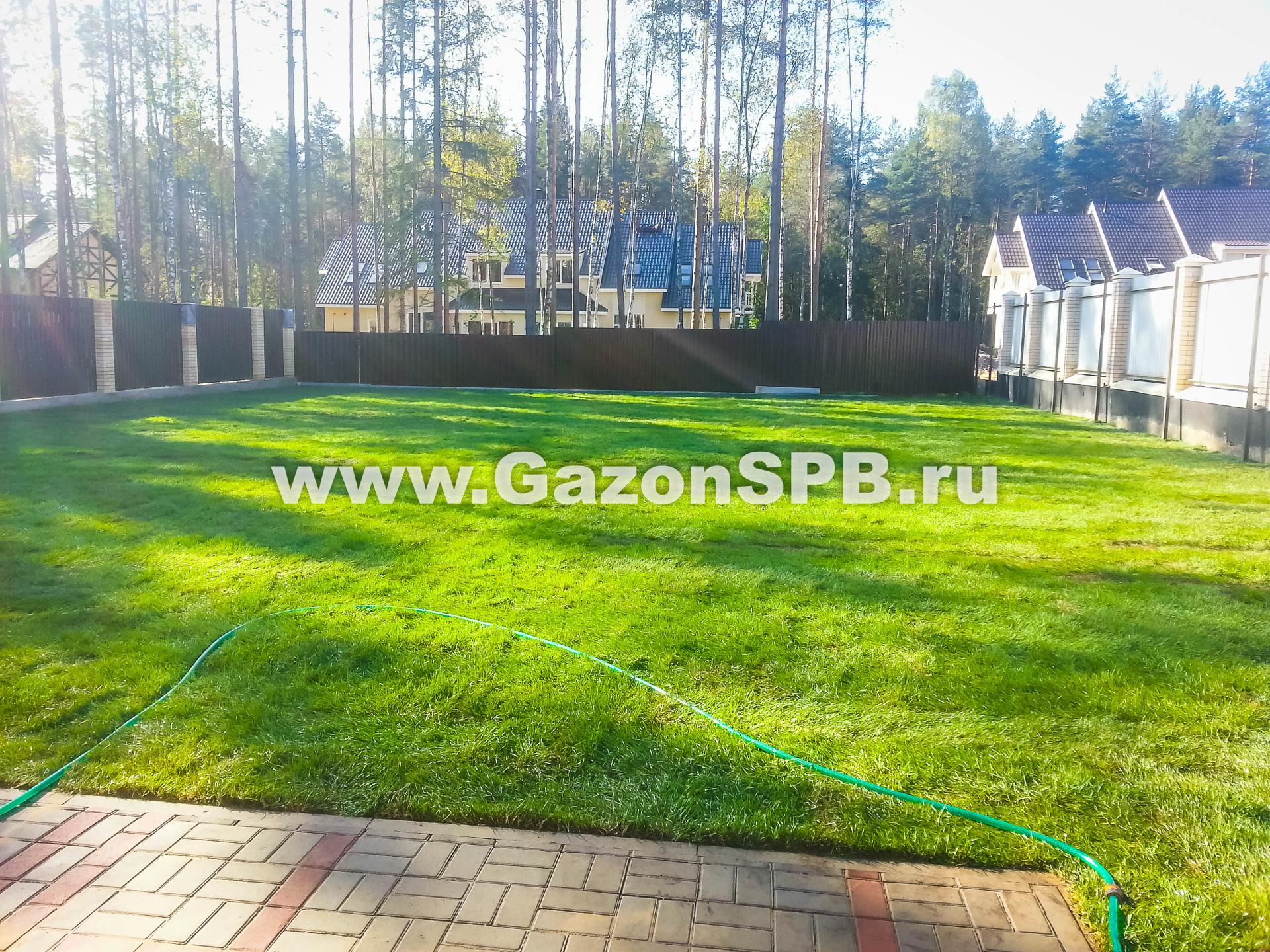 Укладка рулонного газона в г. Всеволожск