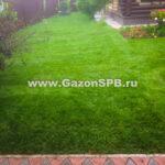 Рулонный газон под ключ в Парголово
