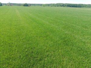 Элитный рулонный газон