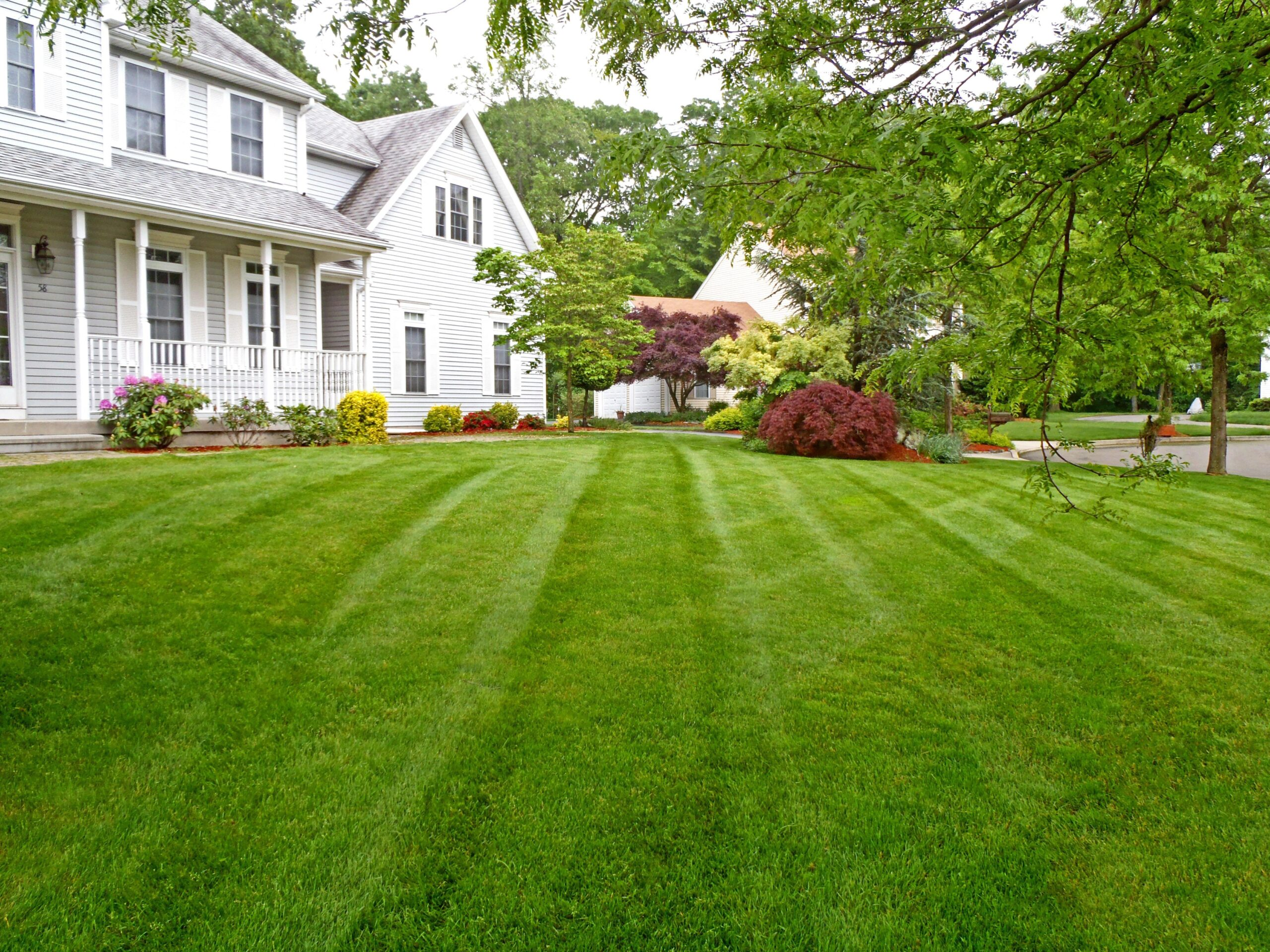 Как восстановить рулонный газон после высыхания?