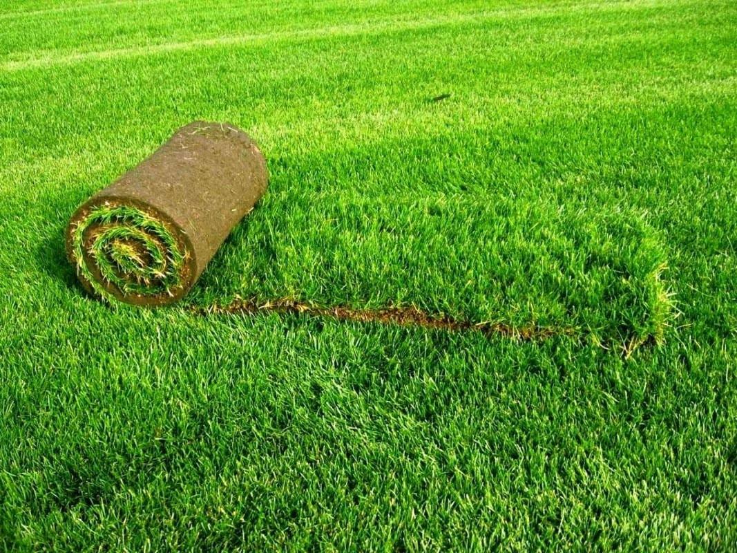 Выращивание газонной травы