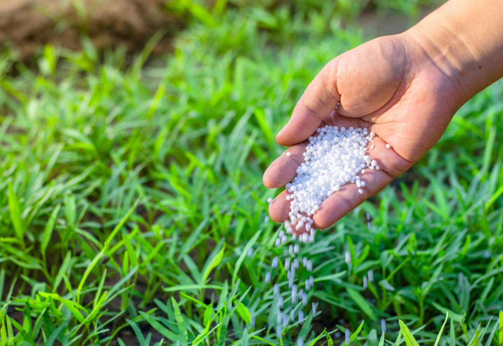 Как ухаживать за рулонным газоном?