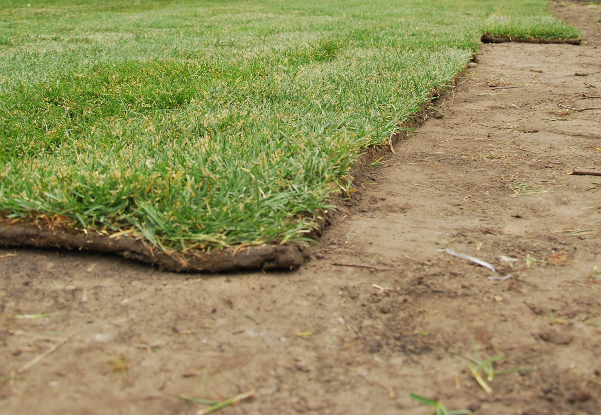Рулонный газон на песке: особенности и уход
